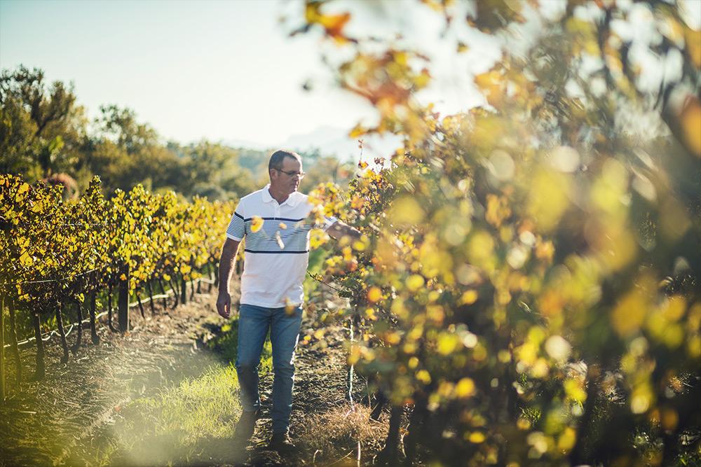niel bester in the vineyards