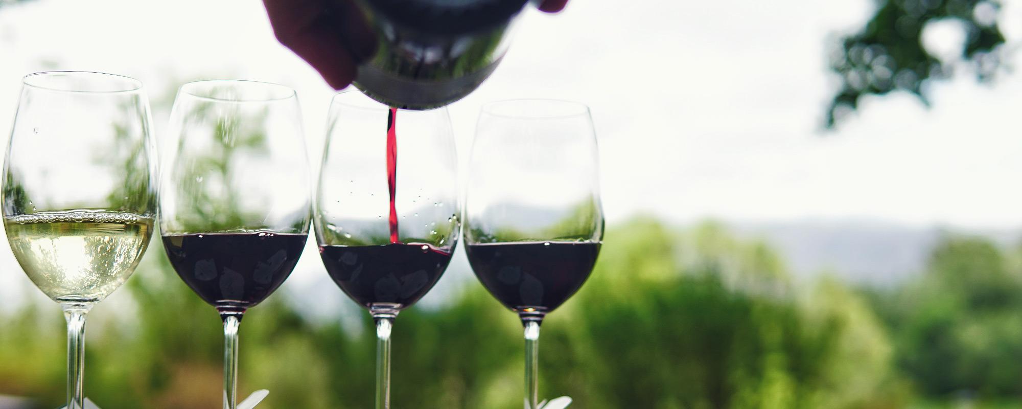 wine tasting and pairing in Franschhoek